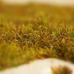 grassmaster_05